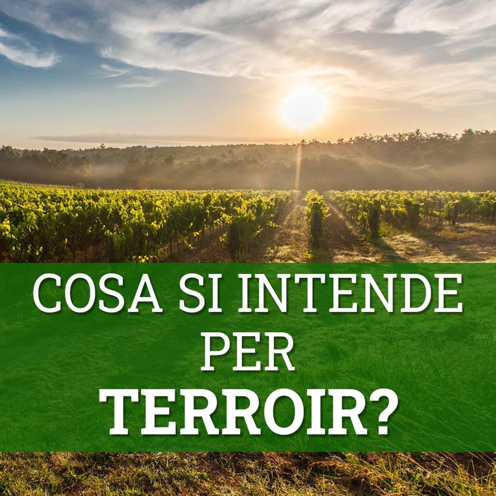 cosa si intende per terroir nel mondo del vino